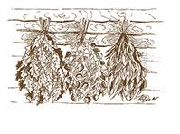 Веники, травы